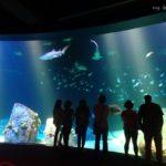 ニューヨーク水族館